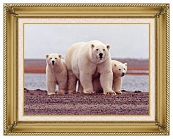 U S Fish And Wildlife Service Polar Bear Female With Cubs canvas with gallery gold wood frame
