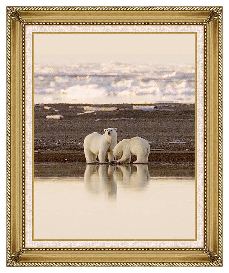 U S Fish and Wildlife Service Polar Bears with Gallery Gold Frame w/Liner