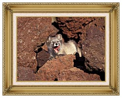 U S Fish And Wildlife Service Arctic Fox canvas with gallery gold wood frame