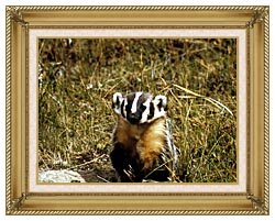 U S Fish And Wildlife Service Badger canvas with gallery gold wood frame