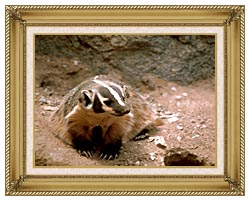 U S Fish And Wildlife Service Badger Art canvas with gallery gold wood frame