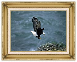 U S Fish And Wildlife Service Bald Eagle Landing On Nest canvas with gallery gold wood frame