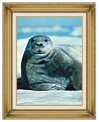 U S Fish And Wildlife Service Bearded Seal canvas with gallery gold wood frame