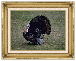 U S Fish And Wildlife Service Eastern Wild Turkey canvas with gallery gold wood frame