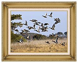 U S Fish And Wildlife Service Flock Of Waterfowl canvas with gallery gold wood frame