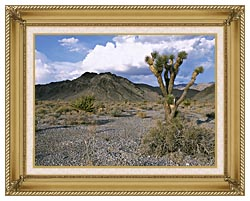 U S Fish And Wildlife Service Joshua Tree In The Desert canvas with gallery gold wood frame