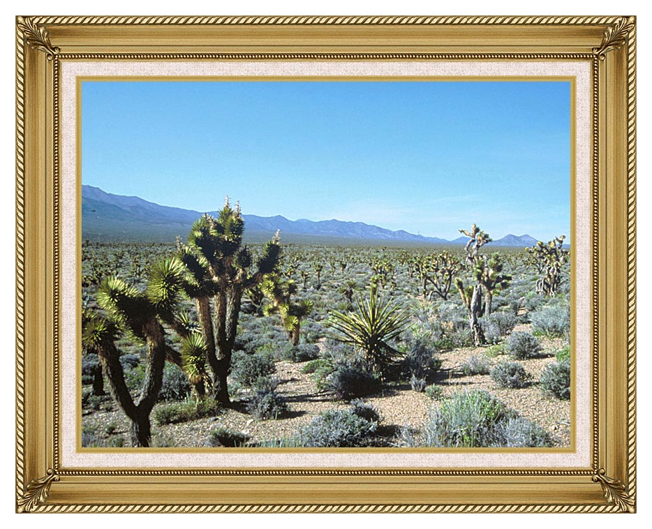 U S Fish and Wildlife Service Yucca Forest with Gallery Gold Frame w/Liner