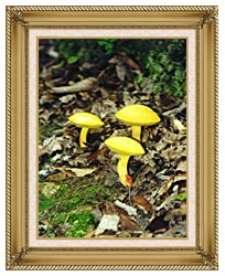 Ray Porter Yellow Bellys canvas with gallery gold wood frame