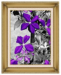Ray Porter Purple Passion Black And White With Color canvas with gallery gold wood frame