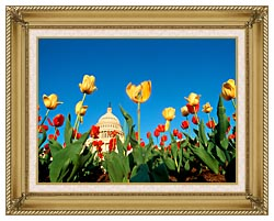 Visions of America Tulips In Spring With U S Capitol Building canvas with gallery gold wood frame