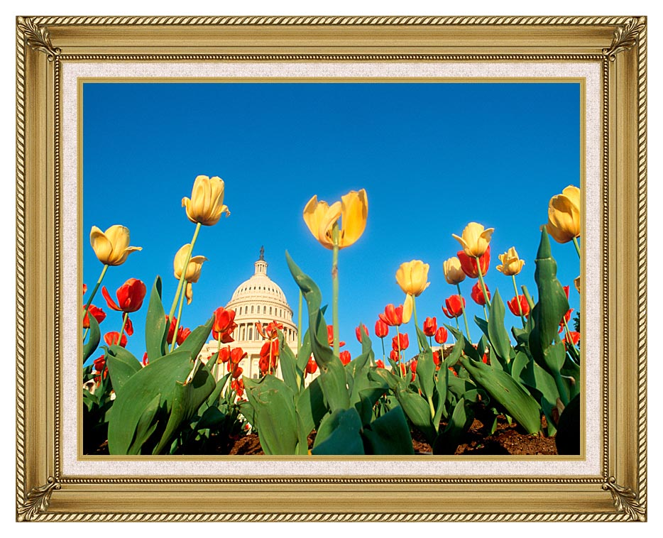 Visions of America Tulips in Spring with U S Capitol Building with Gallery Gold Frame w/Liner