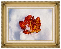 Visions of America Red Maple Leaf In Snow Acadia National Park Maine canvas with gallery gold wood frame