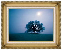 Visions of America Solitary Oak Tree On A Misty Morning California canvas with gallery gold wood frame