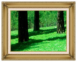 Visions of America Forest Floor At El Dorado National Forest California canvas with gallery gold wood frame