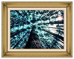 Visions of America Trees In Forest Saratoga New York canvas with gallery gold wood frame