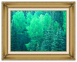 Visions of America Summer In Santa Fe National Forest New Mexico canvas with gallery gold wood frame