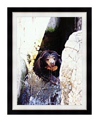 Brandie Newmon Sun Bear Cooling Off canvas with modern black frame