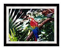 Brandie Newmon Macaw Profile canvas with modern black frame