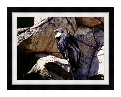 Brandie Newmon California Condor canvas with modern black frame