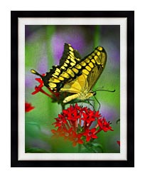 Brandie Newmon Yellow And Black Butterfly canvas with modern black frame