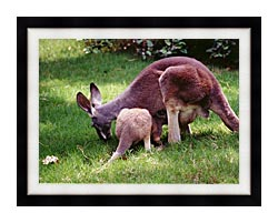 Brandie Newmon Wallaby Mother And Baby canvas with modern black frame