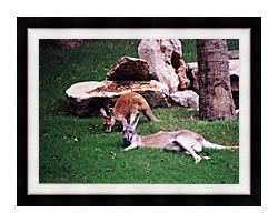 Brandie Newmon Kangaroo With Baby canvas with modern black frame