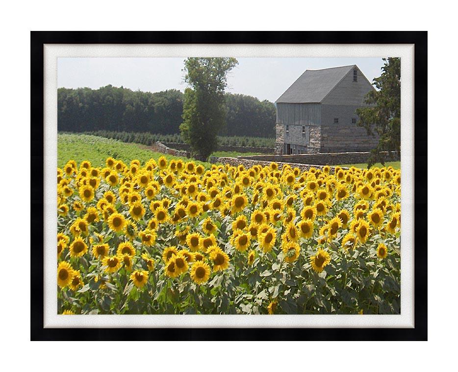Brandie Newmon Sunflower Farm with Modern Black Frame