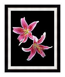 Brandie Newmon Stargazer Lily canvas with modern black frame