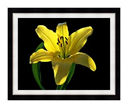 Brandie Newmon Asiatic Lily canvas with modern black frame