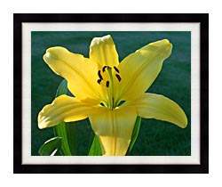 Brandie Newmon Yellow Lily canvas with modern black frame