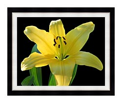 Brandie Newmon Yellow Lily Flower canvas with modern black frame