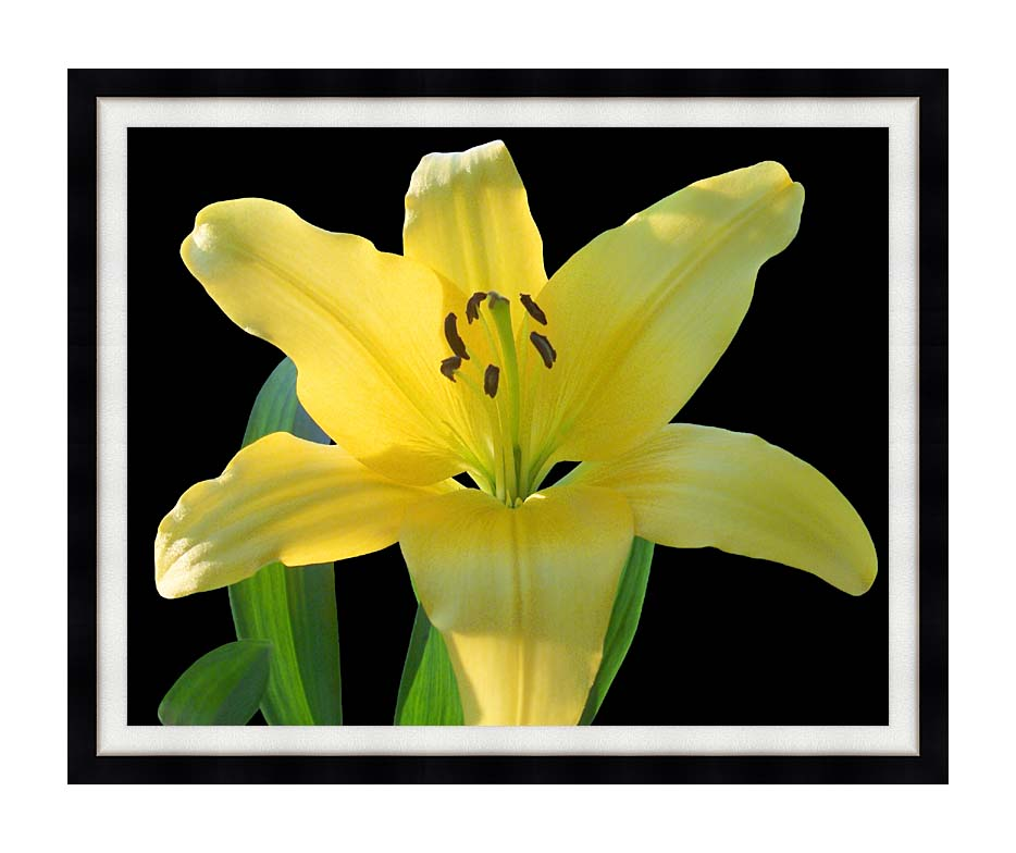 Brandie Newmon Yellow Lily Flower with Modern Black Frame
