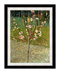Vincent Van Gogh Almond Tree In Blossom canvas with modern black frame