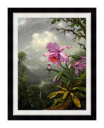 Martin Johnson Heade Hummingbird Perched On The Orchid Plant canvas with modern black frame