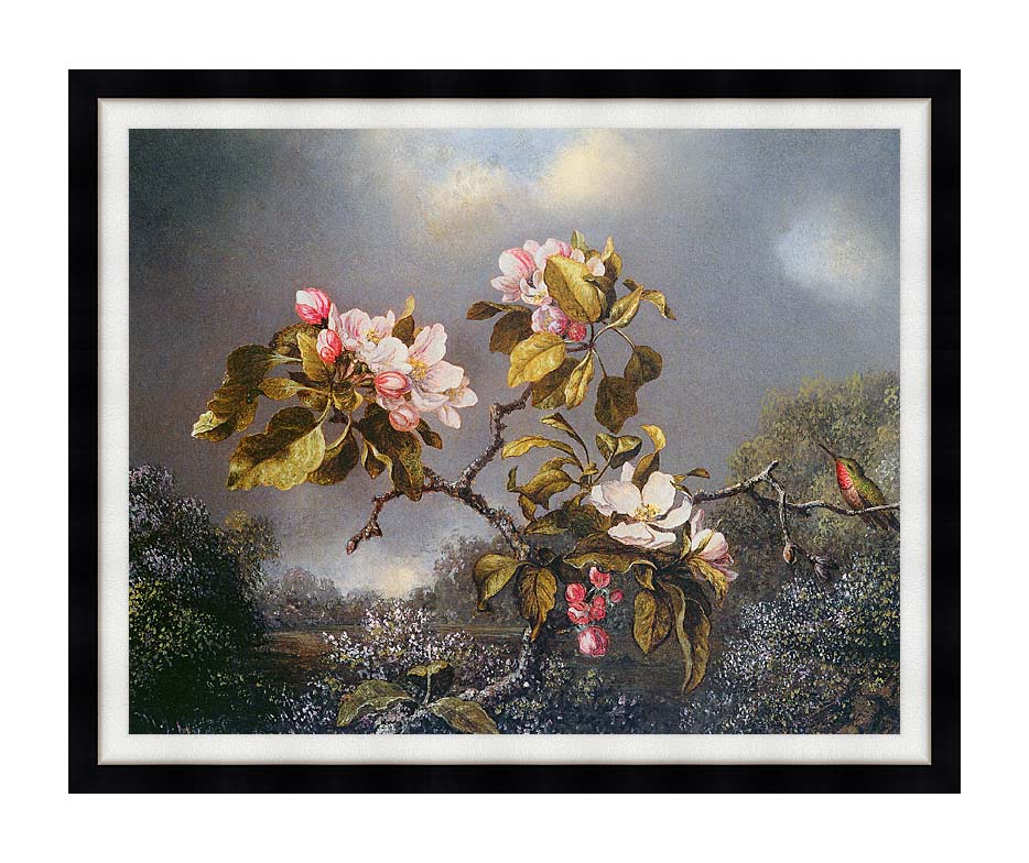 Martin Johnson Heade Apple Blossoms and Hummingbird with Modern Black Frame