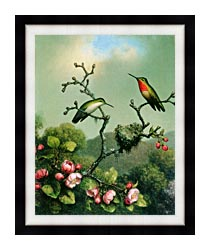 Martin Johnson Heade Ruby Throat Of North America canvas with modern black frame