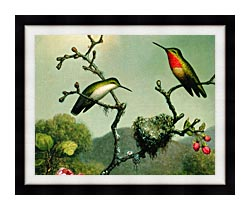 Martin Johnson Heade Ruby Throat Of North America Detail canvas with modern black frame