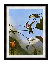 Martin Johnson Heade Amethyst Woodstar Detail canvas with modern black frame