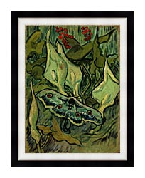 Vincent Van Gogh Emperor Moth canvas with modern black frame