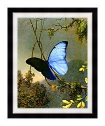 Martin Johnson Heade Blue Morpho Butterfly canvas with modern black frame