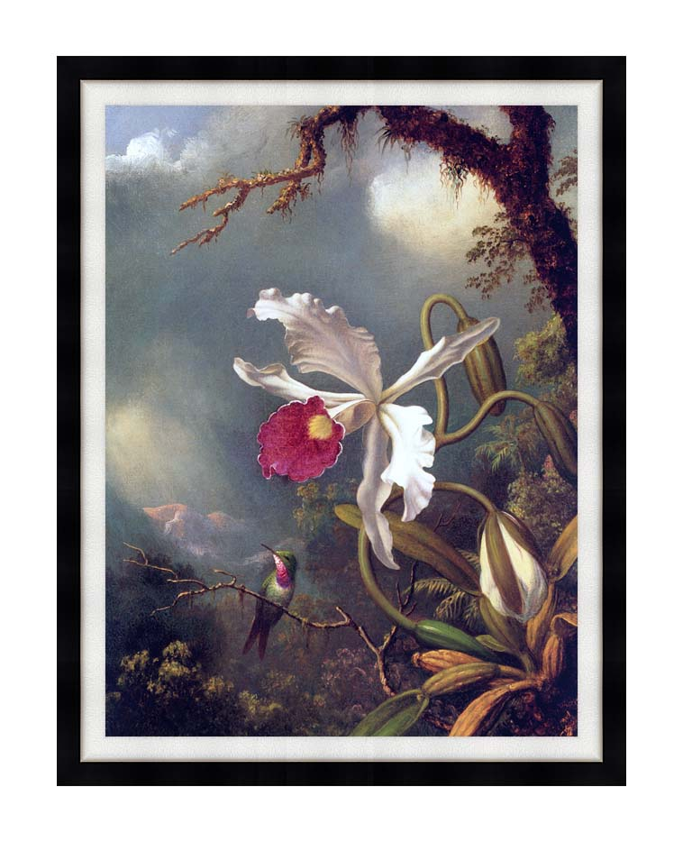 Martin Johnson Heade An Amethyst Hummingbird with a White Orchid with Modern Black Frame