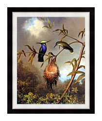 Martin Johnson Heade Black Breasted Plovercrest canvas with modern black frame