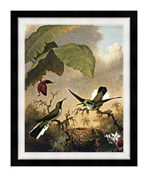 Martin Johnson Heade Black Eared Fairy canvas with modern black frame