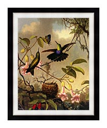 Martin Johnson Heade Fork Tailed Woodnymph canvas with modern black frame