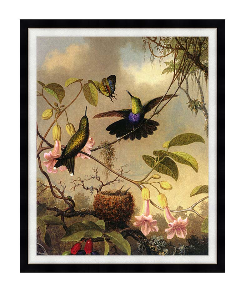 Martin Johnson Heade Fork Tailed Woodnymph with Modern Black Frame