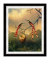 Martin Johnson Heade Two Hummingbirds With Their Young canvas with modern black frame