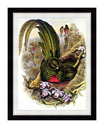 John Gould Quetzal canvas with modern black frame