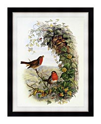 John Gould Robin canvas with modern black frame