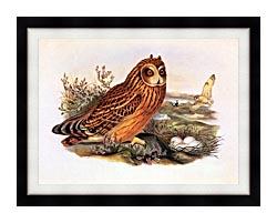 John Gould Short Eared Owl canvas with modern black frame