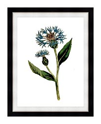 William Curtis Greater Blue Bottle canvas with modern black frame